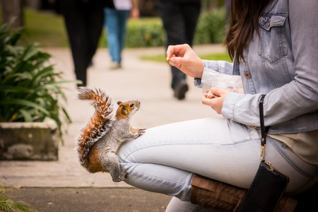 Squirrel eating nut on the leg of a woman photo