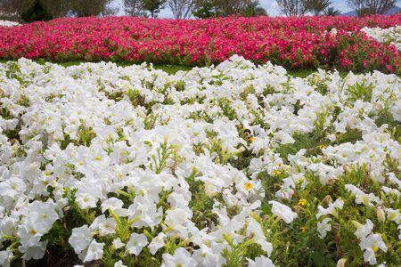 Field carpet of beautiful flowers.