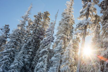 Sunshine and Frozen trees on a winter blue bird day. Banque d'images