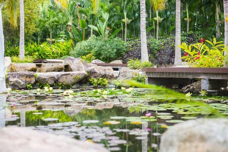 Tropical Pond park with water lily flower. Banque d'images