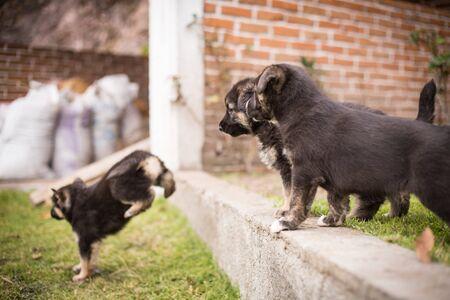 Newborn puppies german shepherd in the garden.
