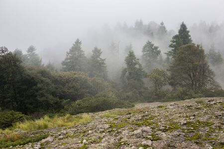 Forested mountain slope in low lying cloud with the evergreen conifers shrouded in mist in a scenic landscape view.