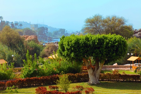 Kitchener island full of greenery, palm trees, trees and other vegetation, Egypt.