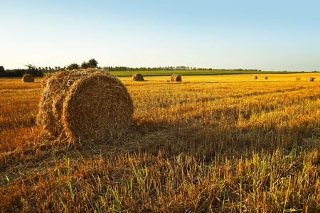 Mown Field corn, large round bales of hay, field corn in the distance, the trees, clear skies and sunsets.