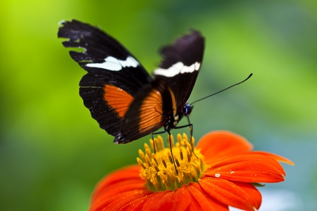 Beautiful butterfly on red flower, green background. Stock Photo