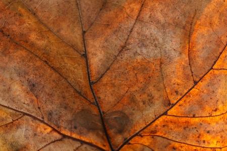 arboles frondosos: Foto de la lista seca, agrietada, con muchos detalles, buena para el fondo Foto de archivo