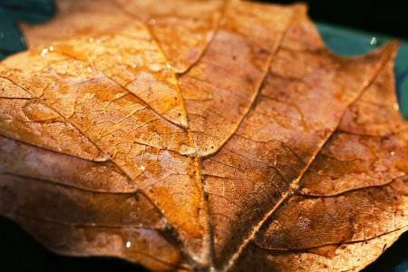 Dry autumn leaf on a green bench  photo