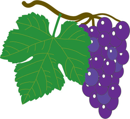 Wine grapes - vector