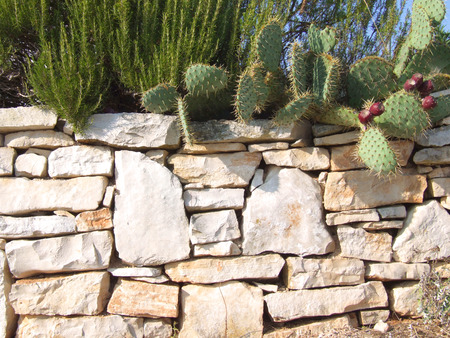 Mediterranean stone wall with cactus and rosemary
