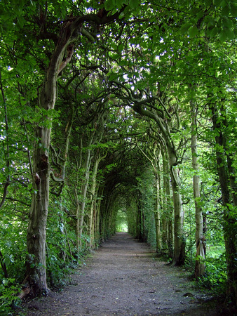 arching: A long pathway with arching green trees Stock Photo