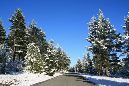 Tall pines covered in snow lining a rural road Stock Photo - 3839551