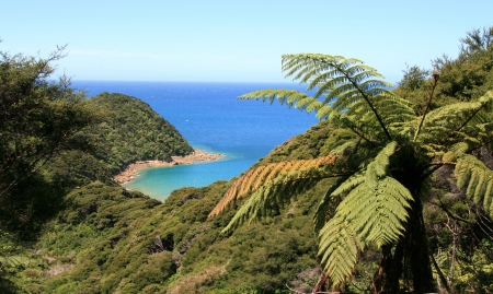 tasman: Looking down into bay in Abel Tasman National Park, New Zealand