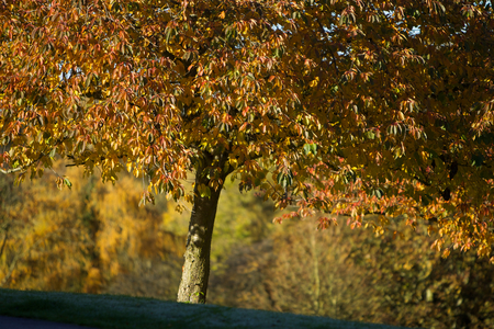 road and path through: Autum Trees in the park in the sunny day