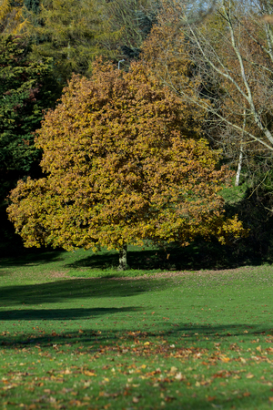 Trees in the park in the sunny day photo