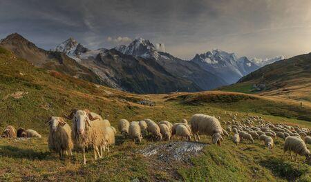 French rams, panorama mont blanc, aiguille du verte, Banco de Imagens