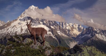 Ibex, panorama mont blanc, aiguille du midi, aiguille du verte, Banco de Imagens