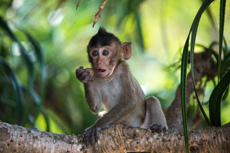 Funny monkey baby sitting at the tree and holding a nut