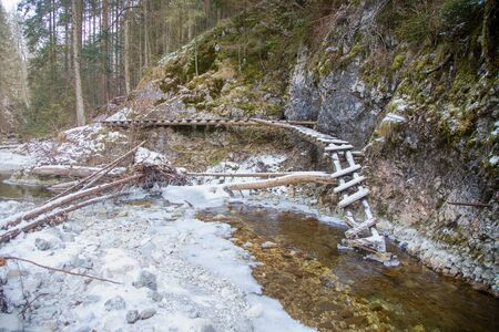 Fallen Wooden Ladder in National Park