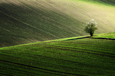 Beautiful detail scenery at South Moravian field during spring, Czech republic.
