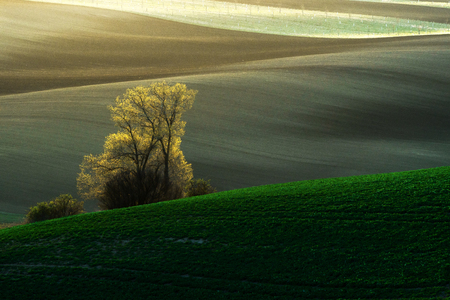 moravia: Beautiful detail scenery at South Moravian field during spring, Czech republic.