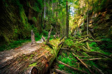 czech switzerland: Foresta nebbiosa nella Boemia Svizzera, repubblica ceca