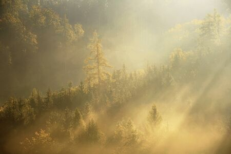 Morning haze in forest after night rain in golden hour. Stok Fotoğraf
