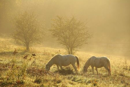 Pasture with horses in the morning haze after a night rain drenched with the first rays of the sun.