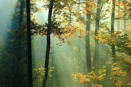 Morning summer forest with sun rays.
