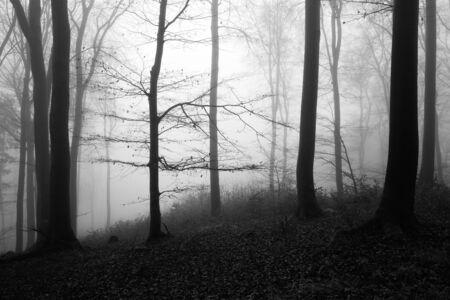 Foresta invernale in bianco e nero, senza neve, sfondo nebbioso, foglie rimanenti su rami e terreno