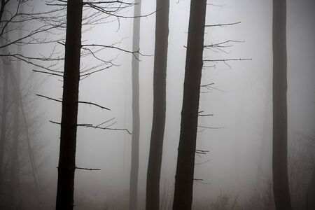Winter forest, no snow, foggy background, leftover leaves on branches and ground, orange and yellow tint