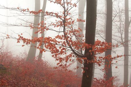 Winter forest, no snow, foggy background, leftover leaves on branches and ground, orange tint