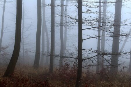 Winter forest, no snow, foggy background, leftover leaves on branches and ground, orange and blue tint