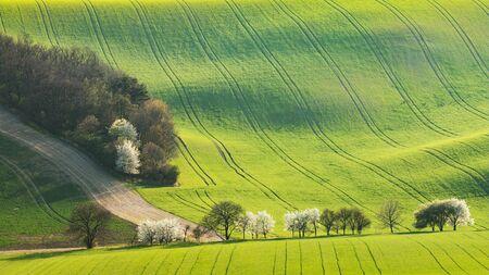 Drzewa wzdłuż ścieżki przez toczące się wiosenne pole ze śladami kół ciągnika