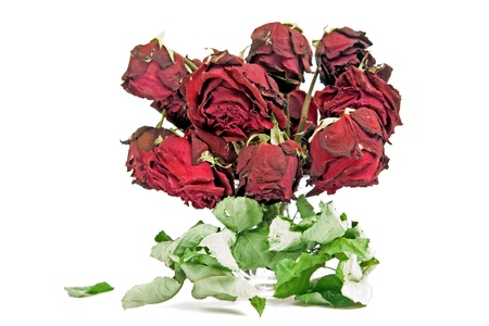 Bouquet of dried roses on a white background photo