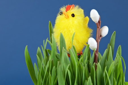 one of the symbols of easter is chick among the grasses Stock Photo - 13042048