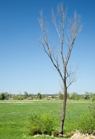 elapsed: dry tree on the background of the rural landscape shows the elapsed time