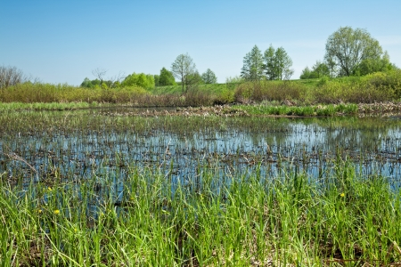 marsh area is a great place of wild birds Stock Photo - 13538768