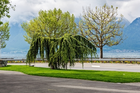 vevey: Trees on the background of the Alps by the Lake Geneva in Vevey