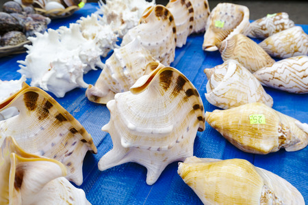 mollusca: Seashells collection put up for sale on the stand in Kolobrzeg in Poland