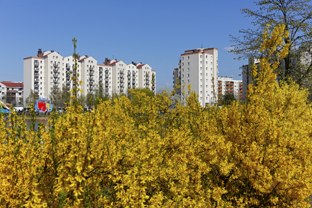 Warsaw, Poland - April 14, 2018: Behind the shrubs with yellow flowers, a modern housing estate is seen in the distance. These multi-storey buildings are located in a city's district called Goclaw