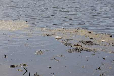Dirt deposits on the surface of the lake pollute the water.
