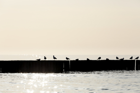 General view of Baltic Sea with a breakwater silhouette, on which there are silhouettes of gulls are seen.