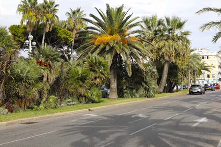Nice, France - September 17, 2018: Two directions of one street are separated by lushly growing palm trees. A few cars stopped in front of the red light. It's by the promenade along the Mediterranean. Editorial