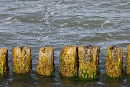 Breakwater poles. These wooden breakwaters serve to protect the coast against the sinister effects of destructive sea waves in Kolobrzeg in Poland 스톡 콘텐츠