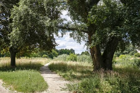 The natural park and its trees with lush leaves and other plants are visible in the Warsaw district called locally Goclaw