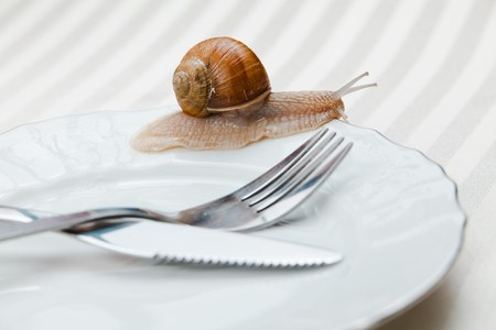 Alive snail on plate with fork and knife. Uncooked yet. Not ready for eating.