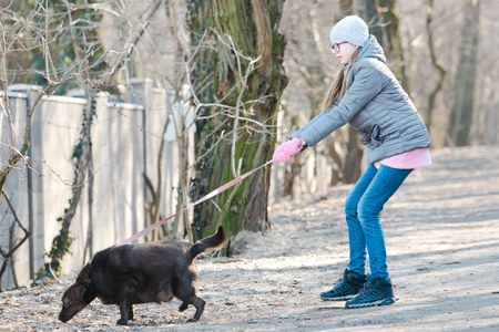 Teen girl walking a dog. A dog is pulling hard to smell a side wall. 版權商用圖片 - 118454943
