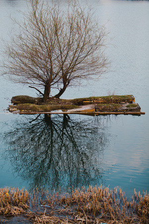 Small artificial island with two trees on a lake. Reflection in water. Environment for birds.
