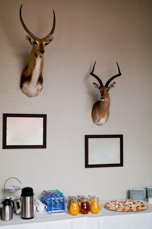 Two trophies of antelope on wall above coffee break in hotel. Decoration in dinning room