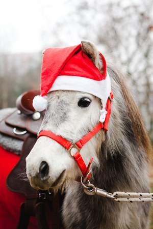 Pony in Santa Claus's red cup, small horse dressed like Christmas horse. Banque d'images